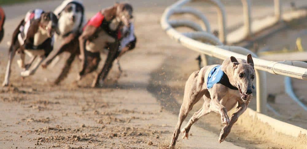 greyhound blog