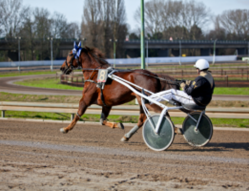 How To Read A Harness Racing Program