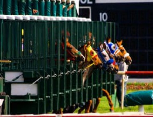 How To Read Horse A Racing Program