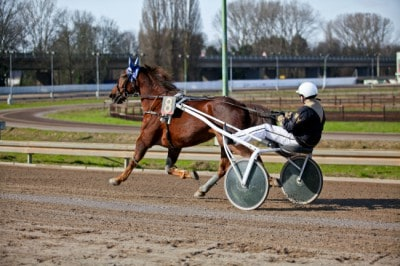 If you understand how to read a harness racing program, you can place smarter bets.