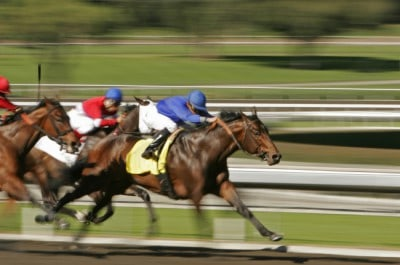 Best horse racing calculator for exotic betting expekt mobile betting sites