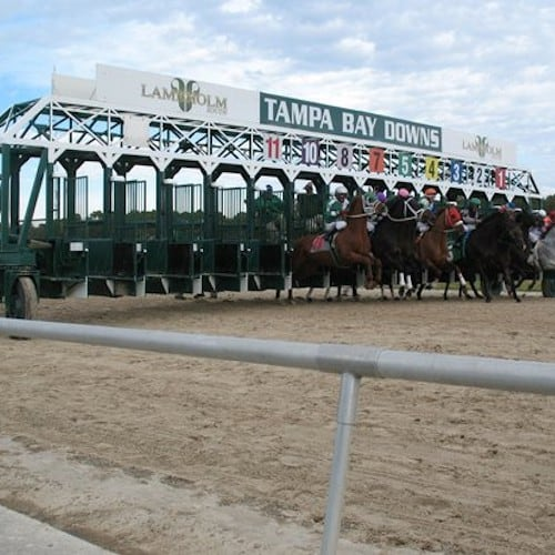 Key Horse Races & Expert Handicapper Bets – February 13, 2021